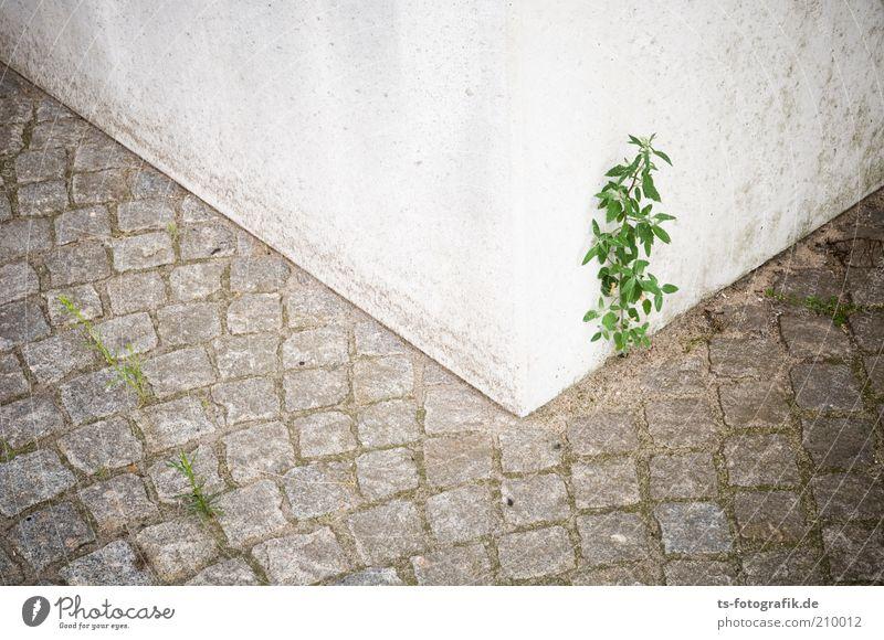 Nature White Flower Green Plant Street Life Gray Stone Lanes & trails Line Power Environment Concrete Growth Bushes