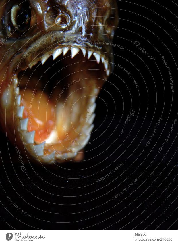 Eyes Animal Dark Fear Fish Threat Wild animal Teeth Set of teeth Anger Fear of death Scream To feed Aggravation Aggression Bite