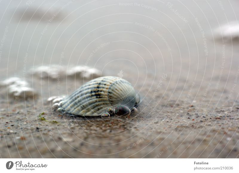 Another fart shell ;-) Environment Nature Elements Water Summer Beach Baltic Sea Ocean Near Wet Natural Mussel Mussel shell Cockle Water blister Colour photo
