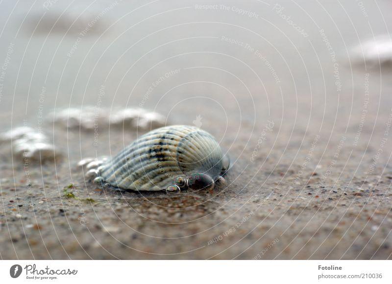 Nature Water Summer Ocean Beach Environment Wet Natural Elements Near Baltic Sea Mussel Water blister Mussel shell Cockle