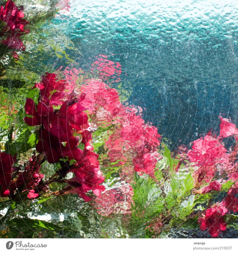 Nature Beautiful Green Blue Plant Red Summer Colour Emotions Blossom Pink Fresh Blossoming Illuminate Unclear Environment