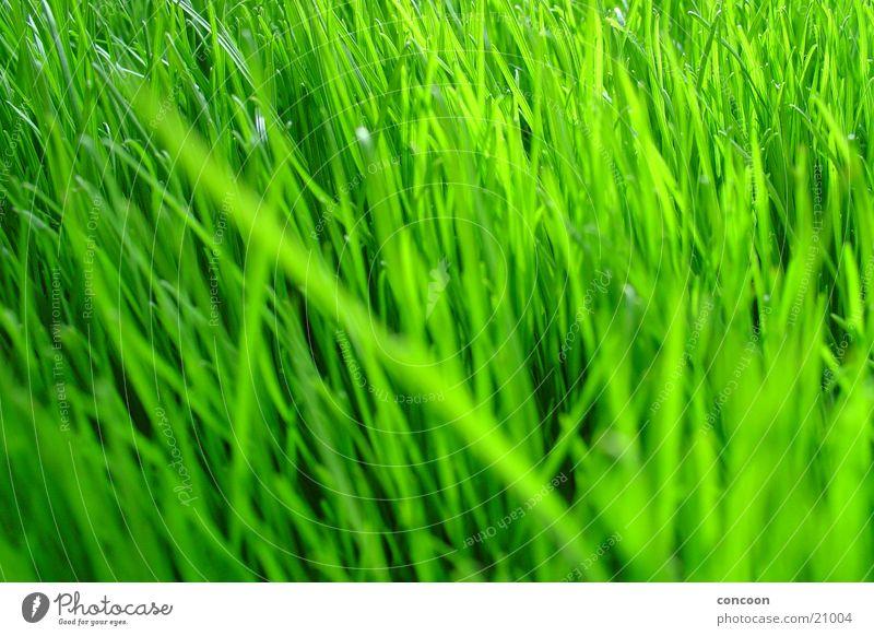 Green Plant Colour Grass Spring Fresh Lawn Clarity Intensive Unprocessed Voluminous