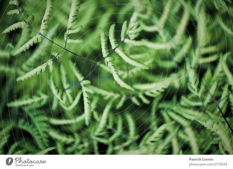 muddle Environment Nature Plant Summer Fern Leaf Wild plant Observe To enjoy Looking Esthetic Dark Elegant Beautiful Natural Colour photo Exterior shot Deserted