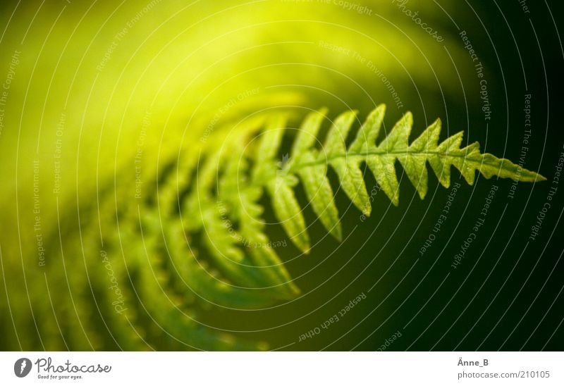 Green Plant Yellow Life Fresh Growth Natural Bushes Soft Serene Harmonious Twig Fern Foliage plant Structures and shapes Peaceful