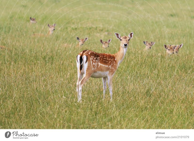 Nature Beautiful Animal Environment Grass Together Elegant Wild animal Group of animals Observe Curiosity Protection Vension Ear Trust Watchfulness