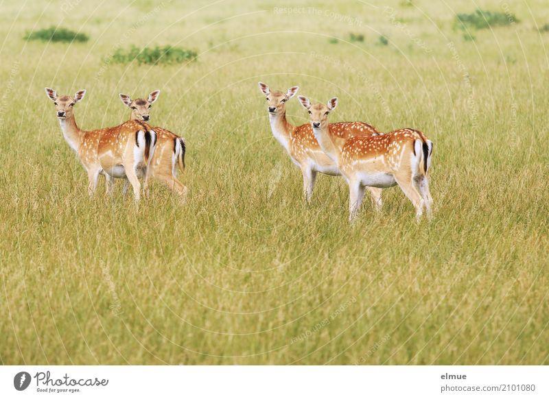 Nature Summer Beautiful Animal Meadow Design Elegant Esthetic Wild animal Idyll Stand Observe Romance Curiosity Ear Trust