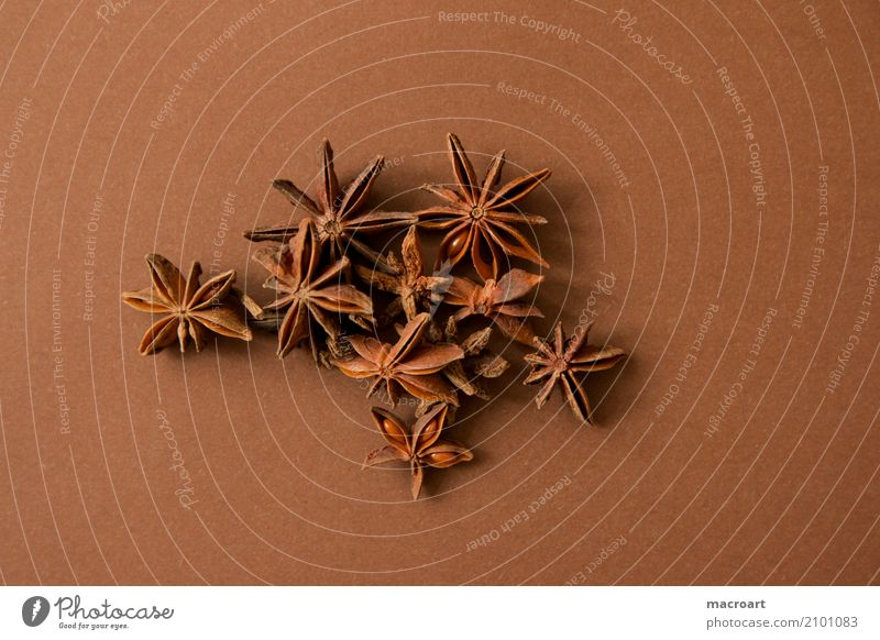 Star anise on brown background Star aniseed Star (Symbol) Brown stars Spicy Herbs and spices Dried Fruit Christmas & Advent Christmas spice Dish Eating