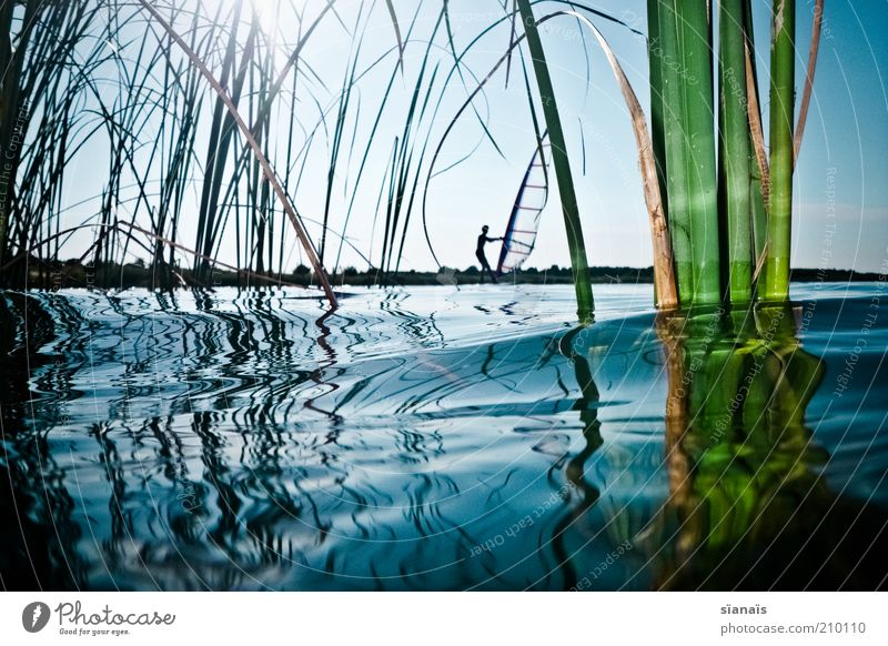 Human being Nature Water Vacation & Travel Plant Summer Environment Sports Grass Lake Waves Masculine Tourism Lifestyle Cool (slang) Idyll