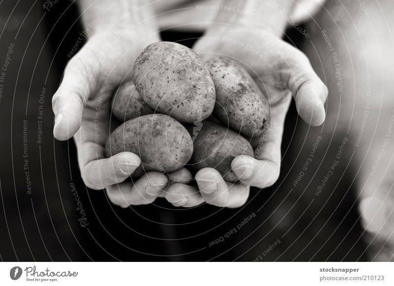 Potatoes Hand hands Food Farmer holding cupped Black & white photo Monochrome Harvest