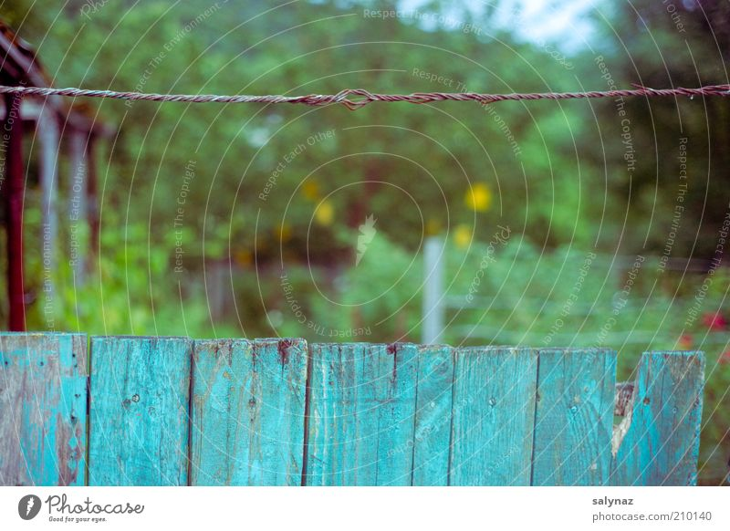 Green Blue Summer Garden Perspective Retro Simple Border Trashy Real estate Blur Section of image Boundary Garden plot Wire cable
