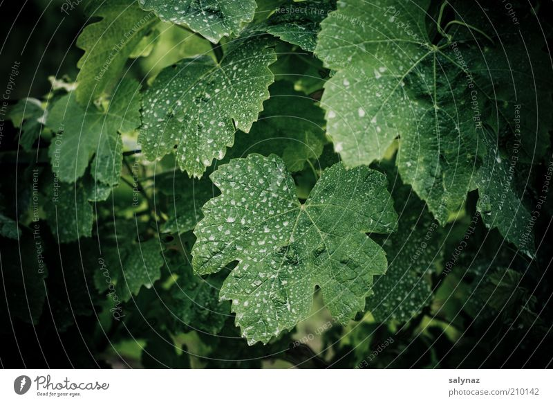 Nature White Green Plant Summer Leaf Black Environment Vine Patch Remainder Dry Dappled Foliage plant Agricultural crop Sprayed