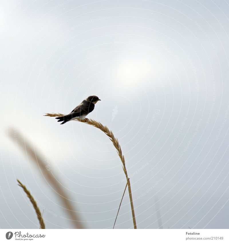 Nature Sky Plant Clouds Animal Autumn Grass Air Bright Bird Small Environment Sit Wing Natural Wild animal