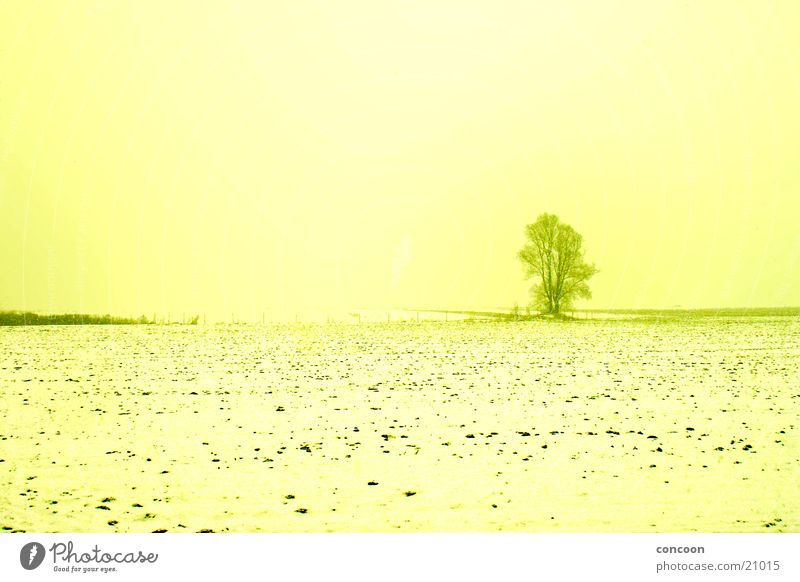 Say goodbye to winter Field Tree Individual Yellow Cold Winter Dresden Snow Sun