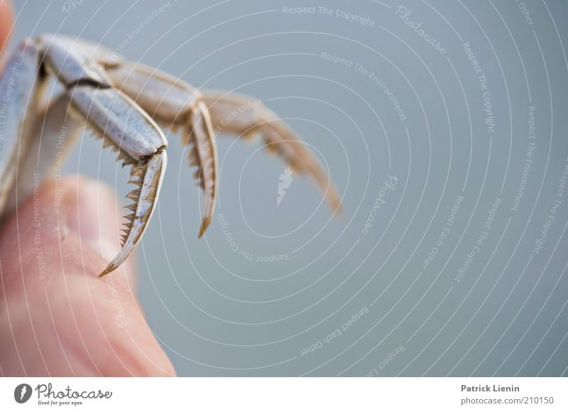 Human being Nature Animal Legs Environment Fingers Hand To hold on Wild animal Thumb Fingernail Section of image Shellfish Blur Dead animal