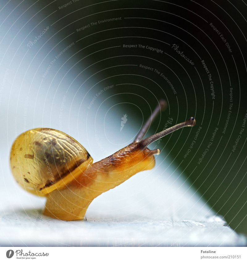 Nature Animal Bright Environment Natural Wild animal Snail Feeler Crawl Macro (Extreme close-up) Movement Slimy Blur Snail shell Baby animal