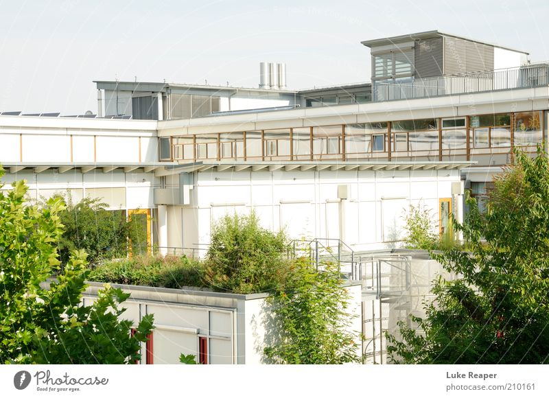 White Tree City Green House (Residential Structure) Relaxation Architecture Facade Modern Roof Living or residing