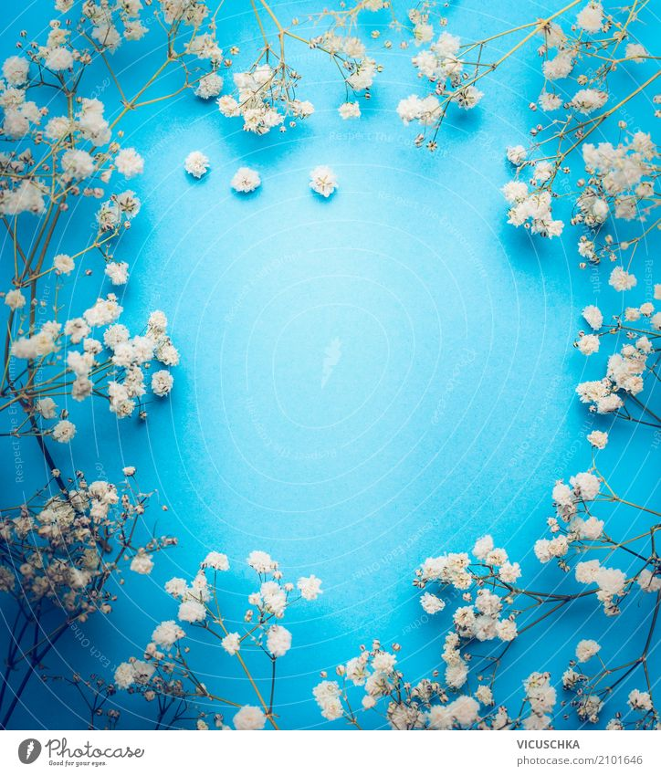 Nature Plant Blue White Flower Life Lifestyle Blossom Love Background picture Style Feasts & Celebrations Design Decoration Elegant Birthday