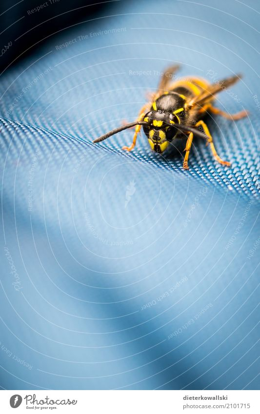 wasp Environment Nature Animal Climate Climate change Farm animal Wild animal Flying Natural Dangerous die of insects Wasps Spine Environmental protection