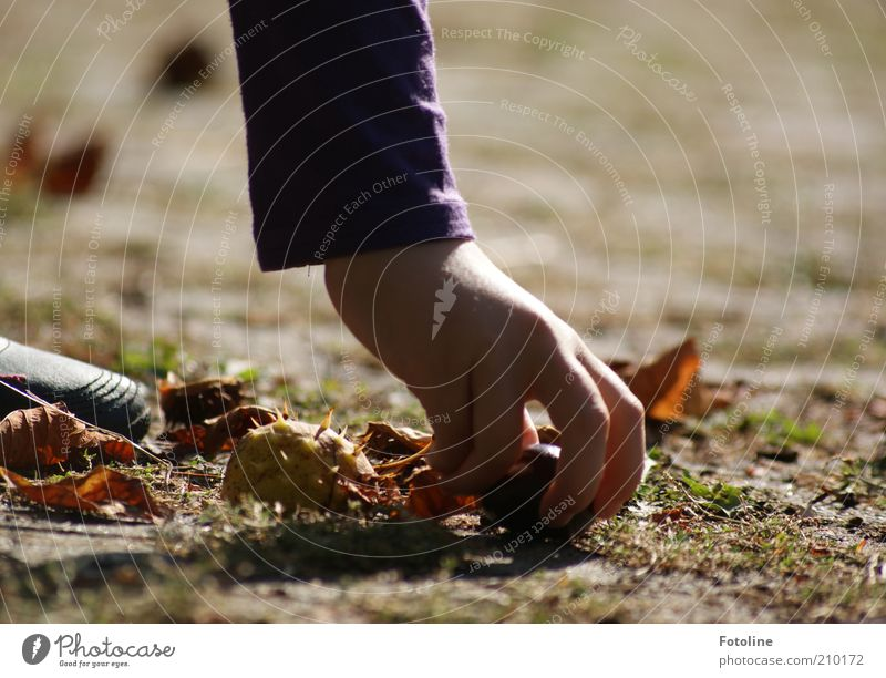 Human being Child Nature Hand Plant Autumn Environment Bright Earth Arm Fingers Natural Elements Discover Collection Thorn