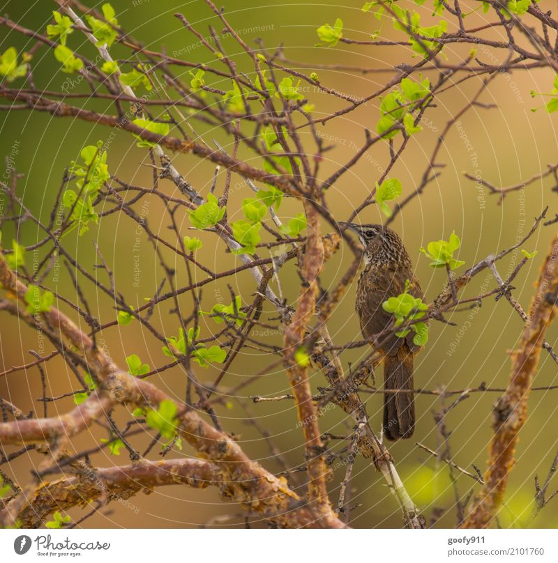 Well camouflaged and yet found :-))) Environment Nature Landscape Plant Animal Air Spring Summer Beautiful weather Warmth Drought Tree Leaf Wild plant Desert