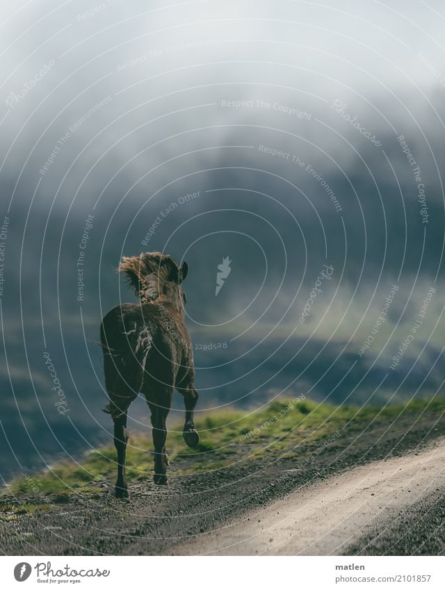 Encounter III Nature Landscape Plant Animal Sky Clouds Spring Bad weather Fog Grass Rock Mountain Horse 1 Brown Gray Green Iceland Ski piste Mane Canyon