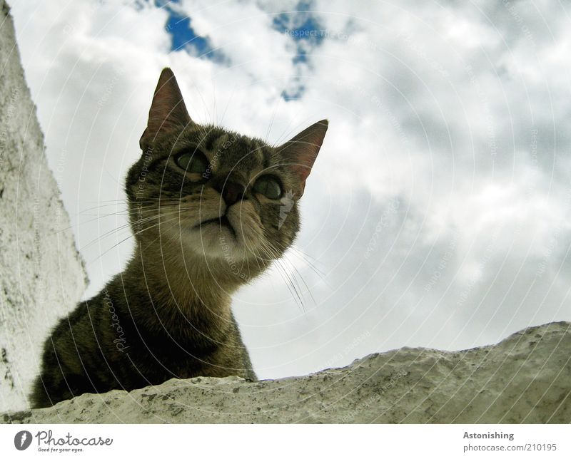 """""""Meow""""? Sky Clouds Summer Animal Pet Cat Animal face 1 Looking Brash Natural Curiosity Blue Brown Gray White Whisker Neck Eyes Domestic cat Cat's head"""
