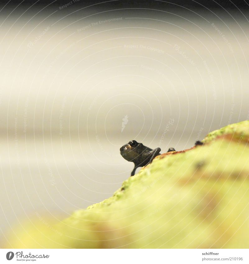 Loneliness Animal Small Animal face Frog Individual Crouch Offspring Worm's-eye view Diminutive Baby animal Bad mood Frog eyes