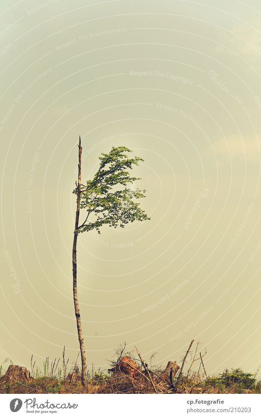 lone fighters Nature Landscape Plant Sky Summer Climate change Storm Tree Foliage plant Small Loneliness Colour photo Day 1 Individual Sparse Forest death Sissy