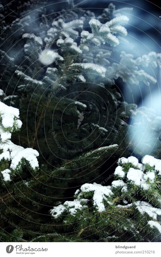 Nature White Green Blue Plant Winter Cold Snow Wood Ice Environment Frost Fir tree Freeze Breathe Expectation