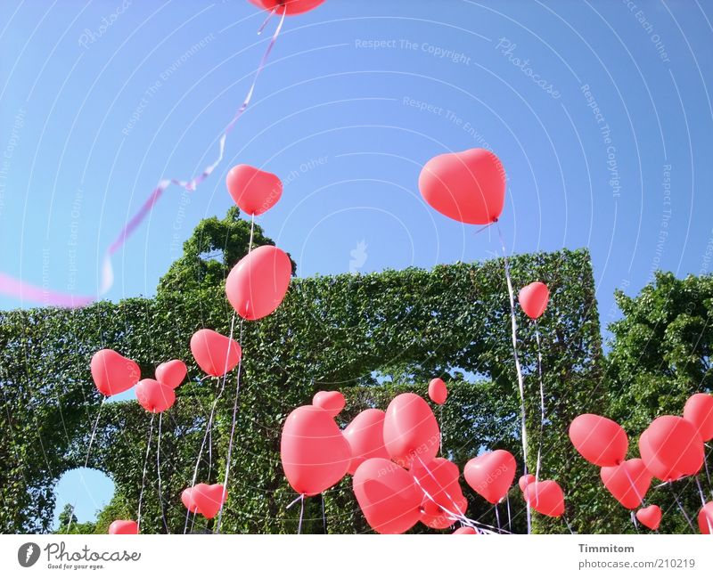 Many hearts for you! Joy Happy Park Balloon Sign Heart String Feasts & Celebrations Playing Happiness Red Emotions Love Romance Optimism Moody Hedge Blue sky