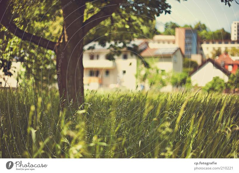 Small town idyll House (Residential Structure) Nature Landscape Plant Sunlight Beautiful weather Tree Grass Foliage plant Small Town Outskirts Deserted Building