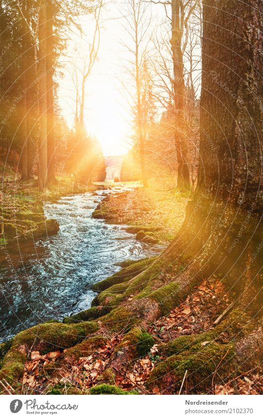 A morning in autumn Trip Hiking Nature Landscape Plant Elements Water Sun Sunrise Sunset Autumn Beautiful weather Tree Moss Park Forest Brook Observe Natural
