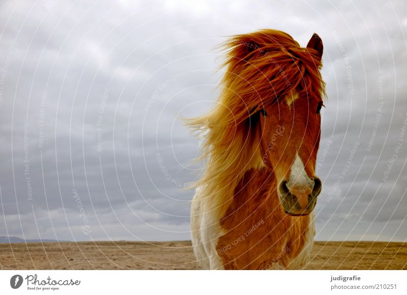 Nature Sky Clouds Animal Far-off places Head Landscape Moody Wait Wind Environment Horse Esthetic Stand Climate Wild