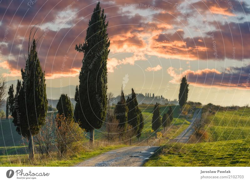 Winding paths with cypress trees between the green fields. Beautiful Vacation & Travel Summer Environment Nature Landscape Plant Sky Clouds Horizon Tree Grass