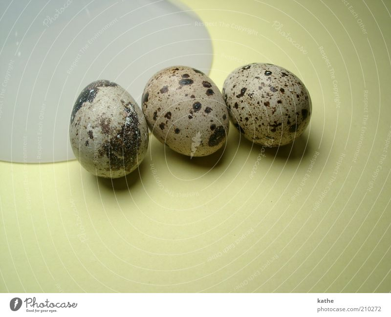 Nature Animal Warmth Brown Together Lie Exceptional Wild Food Fresh Nutrition Esthetic Elements Near Egg Organic produce