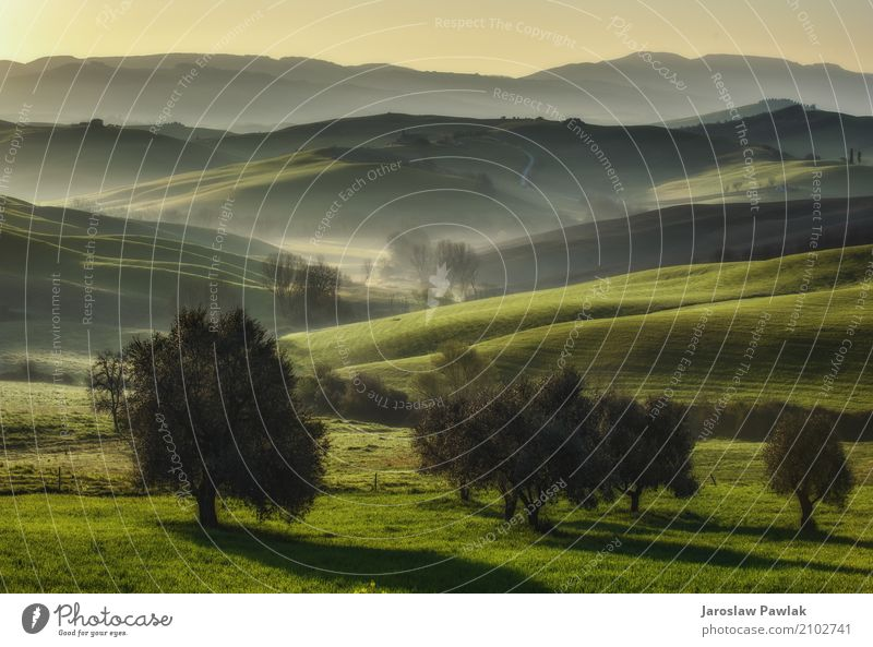 Tuscan fields and olive trees at sunrise in a mystical fog Nature Vacation & Travel Plant Summer Green Sun Tree Landscape House (Residential Structure) Street