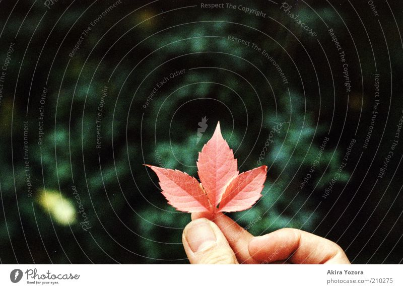 Nature Green Red Leaf Black Loneliness Colour Autumn Small Near Natural Middle To hold on Discover Thumb
