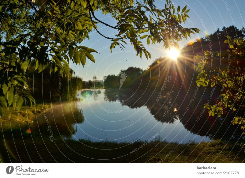 Fish food | Heron circles over fish pond Environment Nature Landscape Elements Water Cloudless sky Sun Tree Bushes Pond Lake Bird Moody Idyll Climate Calm