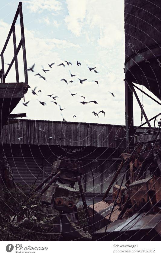 up & away Industry Machinery Industrial plant Animal Wild animal Bird Pigeon Group of animals Flock Metal Free Moody Joie de vivre (Vitality) Together Hope