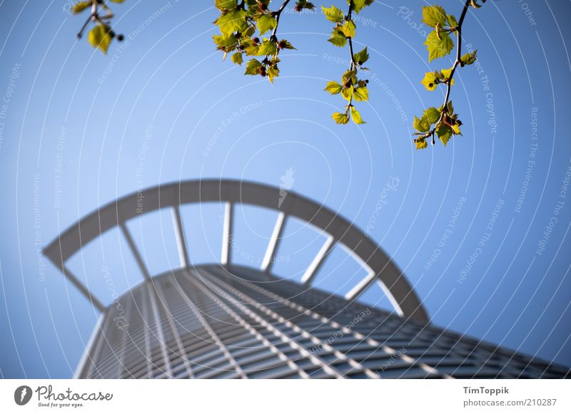 Nature Tree Leaf House (Residential Structure) Architecture Building Facade Tall High-rise Branch Financial institution Bank building Manmade structures Skyline