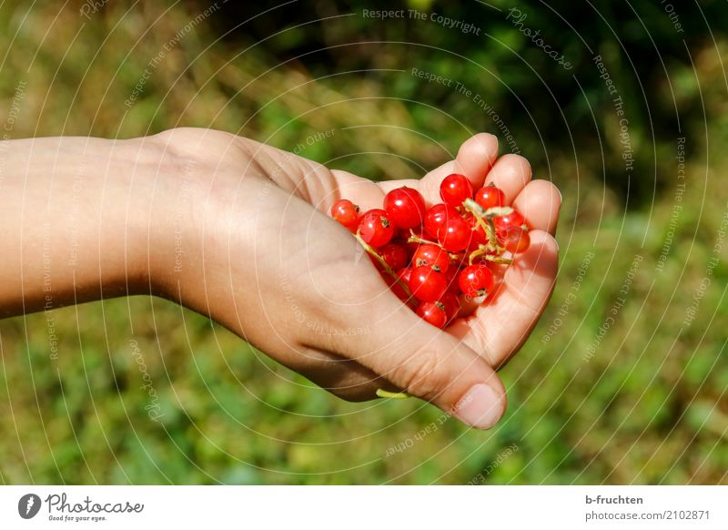Child Nature Summer Green Hand Red Healthy Boy (child) Fruit Leisure and hobbies Fresh Infancy Fingers Harvest Indicate Organic produce
