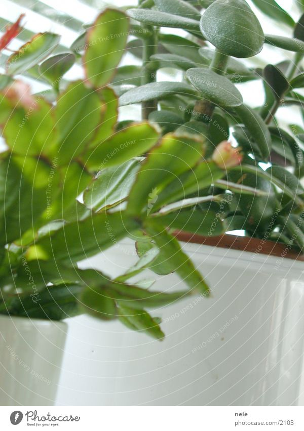 Living in the countryside Houseplant Baobab tree Window board Light Green Leaf Easter cactus Living or residing