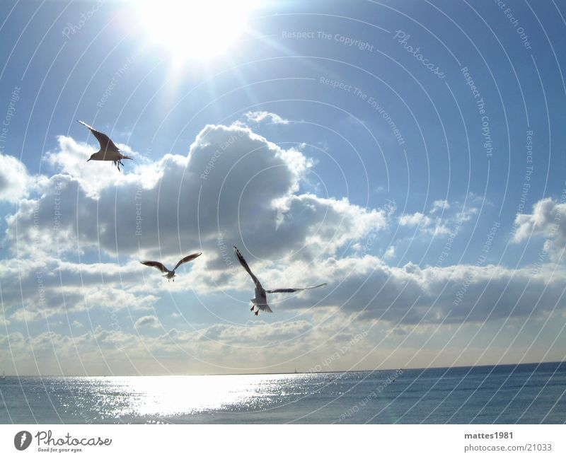 Water Sun Ocean Blue Summer Cold Freedom Lake Waves Coast Wind Fish Seagull Fishing (Angle) Surf Bird