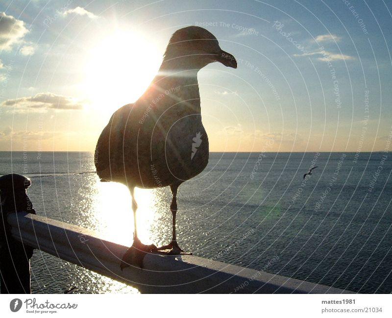 Sun Ocean Summer Vacation & Travel Nutrition Relaxation Dream Warmth Bird Waves Transport Aviation Near Trust Seagull Feeding