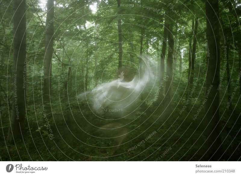 forest fairy Trip Human being Art Environment Nature Landscape Summer Plant Tree Forest Movement Rotate Dance Dream Mysterious Long exposure Fairy