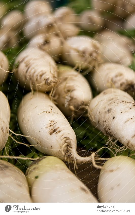 radish Food Vegetable Radish Organic produce Vegetarian diet Marketplace Select Sell Simple Fresh Healthy Good Delicious Many Green White Quality Colour photo
