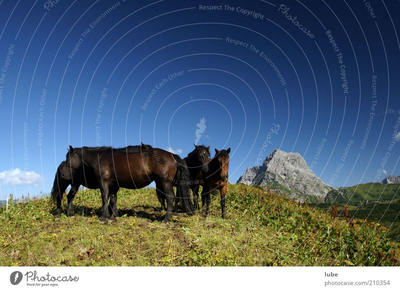 Nature Blue Summer Vacation & Travel Animal Far-off places Meadow Grass Mountain Freedom Landscape Rock Horse Tourism Group of animals Alps