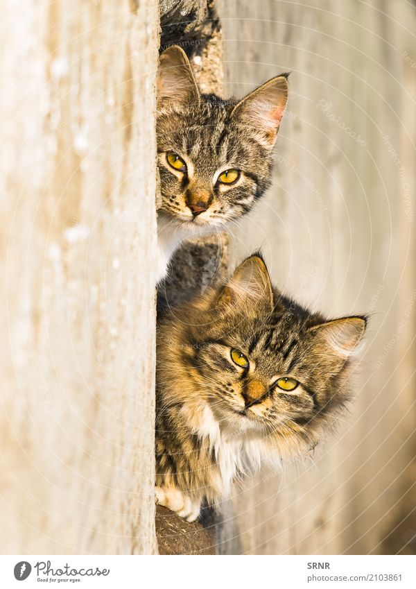 Outdoor Cats Animal Fur coat Pet Wild Delightful Aperture cats ears embrasure fluffy furry Hole Kitten lazy Look out Mammal peek out peep peep out peer
