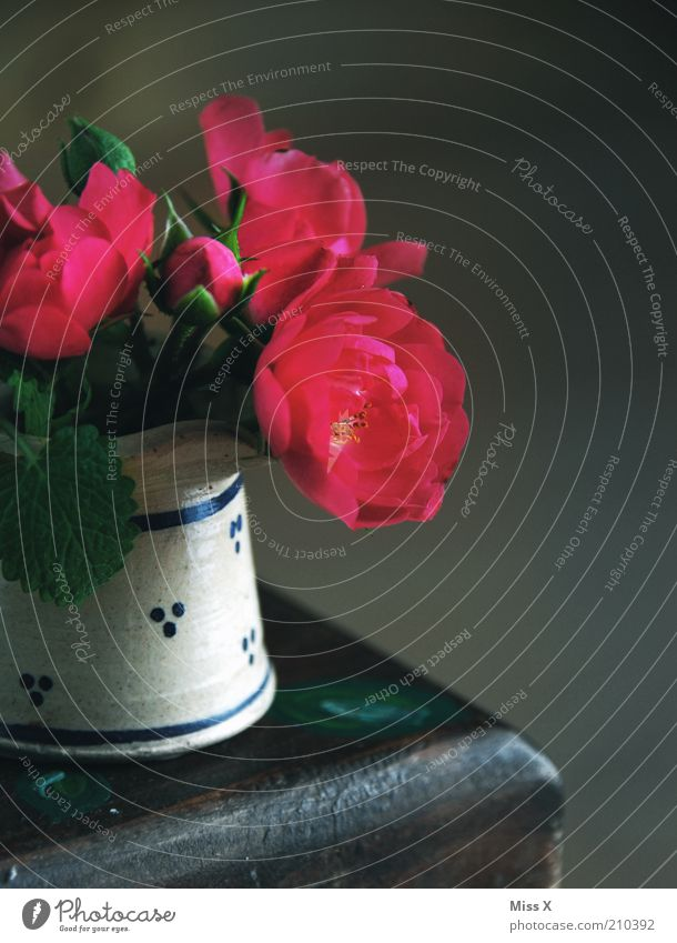 roses Flower Rose Blossoming Fragrance Dark Kitsch Small Transience Vase Colour photo Multicoloured Interior shot Close-up Copy Space right Shadow