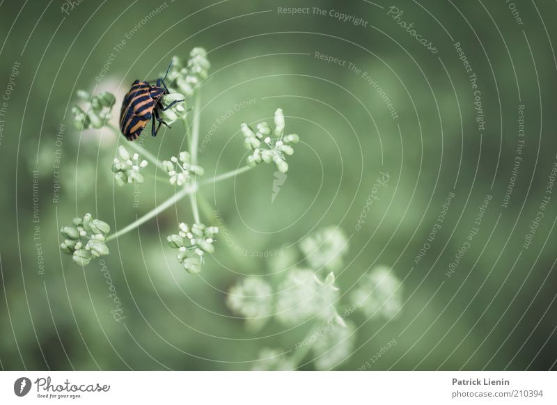 Nature Beautiful Green Plant Summer Calm Animal Blossom Wait Environment Sit Soft Insect Curiosity Wild animal Cute
